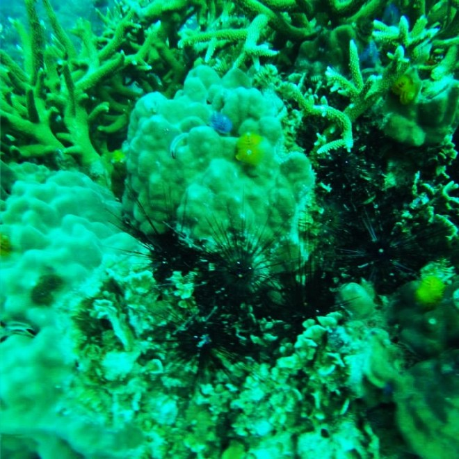 Sea Urchin and Coral