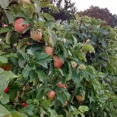 nursery Amazing range of plants grown peat and pesticide free