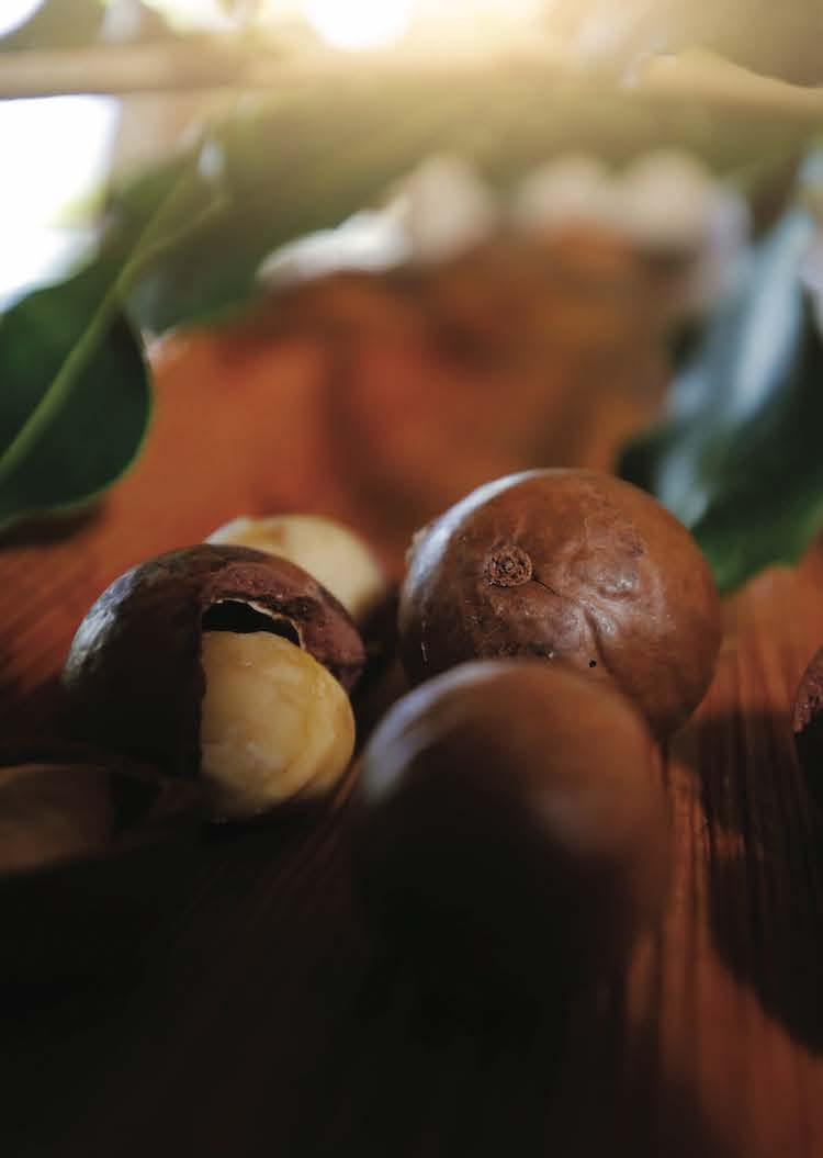 Hawaii Island Macadamia Nuts  edible Hawaiian Islands