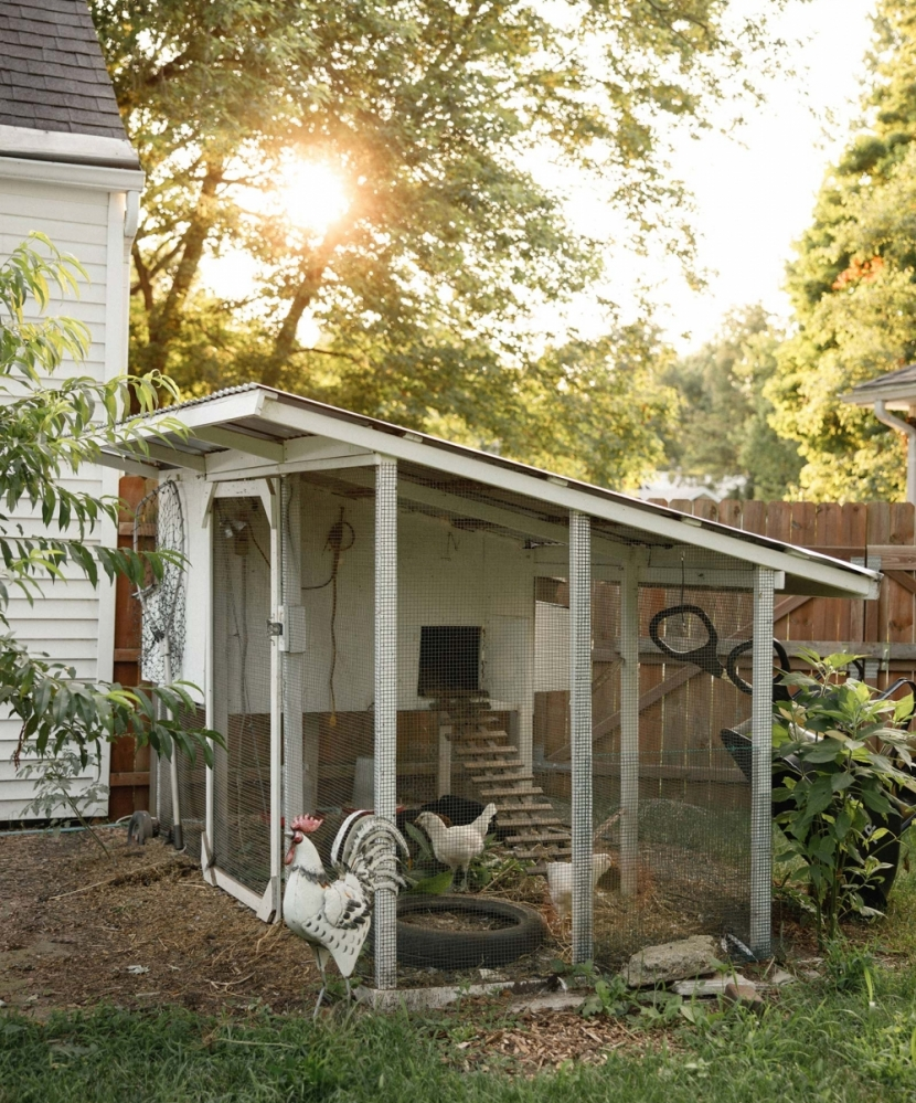 Backyard Chickens Are Growing In Popularity Edible Michiana
