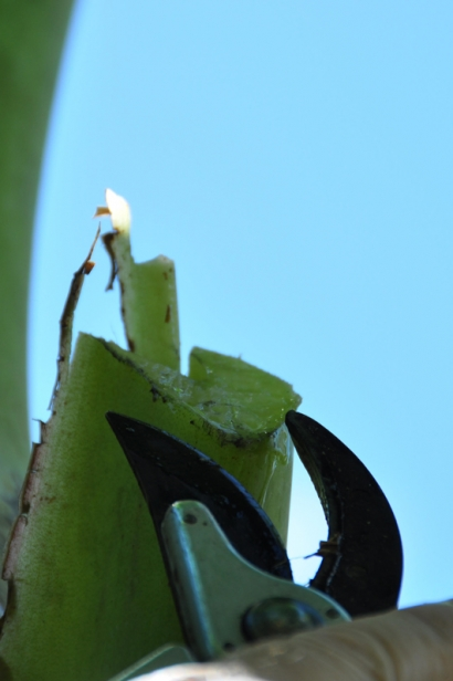 Using Leaves Mulch Florida