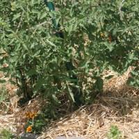 The Secret to a Happy Garden Despite the Heat