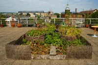 Londons Rooftop Vegetable Gardens | Edible Urban Roofs