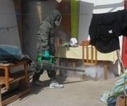 Fumigarán 5.905 viviendas en Alto Hospicio para terminar con insectos y roedores
