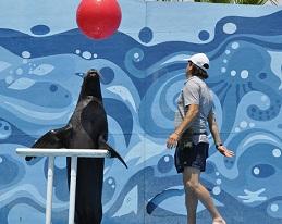 Vuelve el Show de los Lobos Marinos en el parque tamático de Playa Cavancha