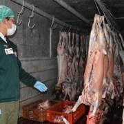 Intensifican fiscalizaciones de faenamiento de ganado en Tarapacá por festividad de San Lorenzo