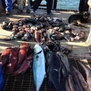 Advierten urgencia de tomar medidas para manejo sustentable de la pesquería en macro zona norte