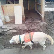 GOPE Tarapacá colabora en búsqueda de desaparecidos con can especialmente entrenado