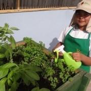 """FOSIS promueve prácticas de vida saludable en escolares utilizando mediante programa """"Vive tu Huerto"""""""