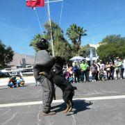 Brigada canina de Gendarmería en demostración de variadas maniobras