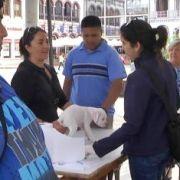 Efectiva campaña de esterilización e identificación todos los miércoles en la plaza Prat de Iquique