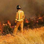 Incendios forestales: Colegio de Periodistas llama a la ciudadanía a informarse a través de fuentes de información comprobables