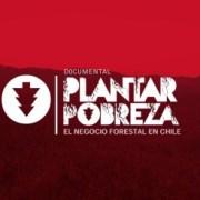 Decreto 701: El millonario bono gubernamental que financió a las grandes forestales