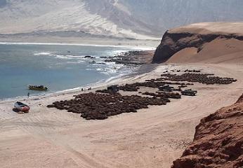 Comité de manejo algas pardas analiza medidas para evitar la sobre explotación y daño al recurso
