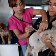 Llaman a hospicianos que  inscriban a sus mascotas para que puedan ser esterilizadas