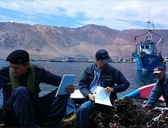 Más de 18 mil kilos de algas pardas extraídas de forma ilegal, incautadas por Sernapesca en Tarapacá