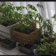 Innovador proyecto de huerto saludable en las instalaciones del FOSIS para acceder directamente a los alimentos