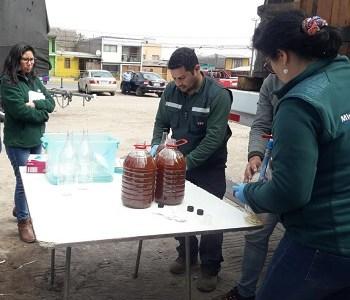 SAG realizó intensa jornada de fiscalización de chicha y pipeño, bebida alcohólica de consumo en Fiestas Patrias