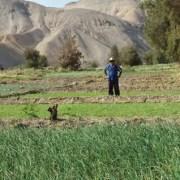 Partió recepción de avisos de inicio de prácticas labores anticipadas para Concurso de recuperación de suelos degradados