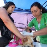 En Caleta San Marcos Municipalidad realiza atención de mascotas e instalación de microchip