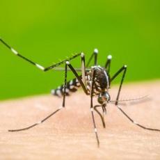 Salud llama a reforzar medidas de precaución ante brote de infección viral transmitida por mosquito Aedes aegypt