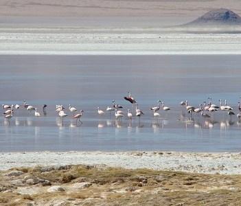 Anuncian la creación del Parque Nacional del Salar del Huasco, ubicado en la comuna de Pica.