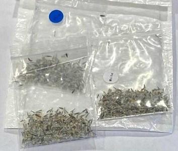 SAG llama a estar atentos ante paquetes de semillas recibidas desde el extranjero no solicitadas por las personas.