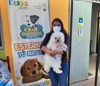 Avanzan atenciones a las mascotas y se reducen las listas de espera que aumentaron por la pandemia