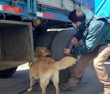Brigada canina del SAG Tarapacá detectó 349 kilos de productos agropecuarios de riesgo pese a cierre de fronteras