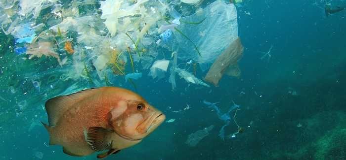 Microplastics: Plastics, plastics everywhere - WWT