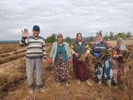 Edirne'de 120 yıldır ekilen fıstığın hasadına başlandı