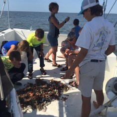Edisto Island shrimping tours
