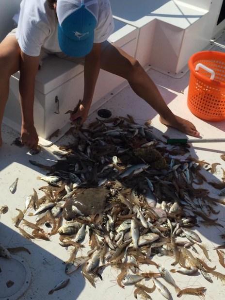 Today's catch on an Edisto Island shrimping tour