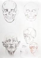 Anatomia ludzkiej głowy