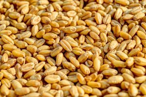 Image of Whole Grains