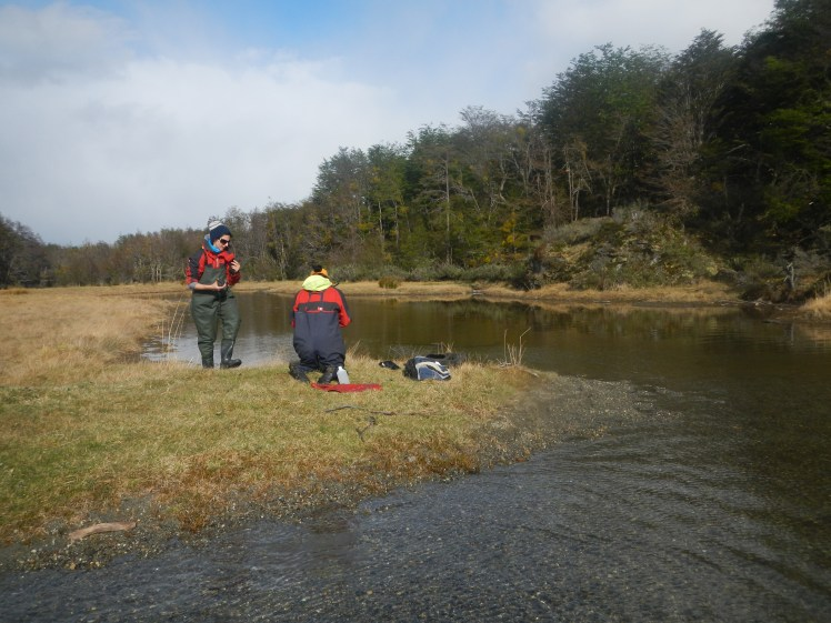 Salmon Chinook en TDF1