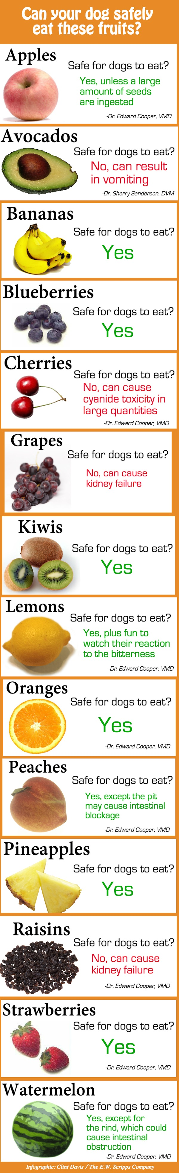 Infographic: Fruits That Are Safe And Unsafe For Your Dog ...