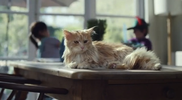 Hilarious Ad Stars A Cat Who Wants To Seize The Day  Be