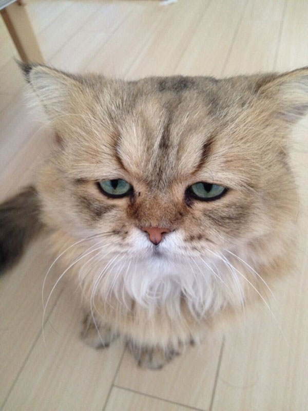 In Japan A Disappointed Cat Is The Feline Of The Moment