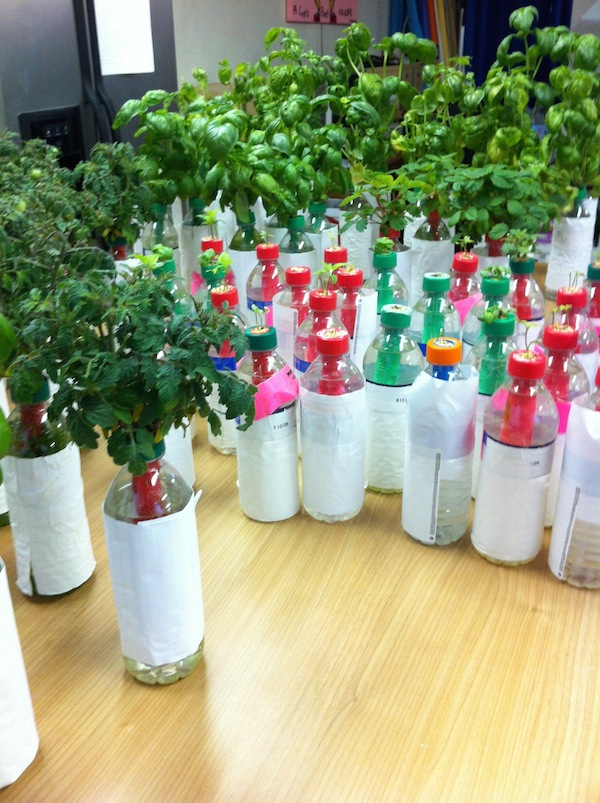 Petomato Lets You Recycle Plastic Bottles By Growing