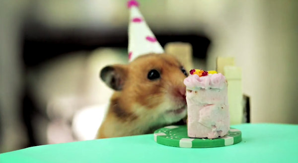 Awww Adorable Hamsters Attend A Cute Hedgehogs Birthday