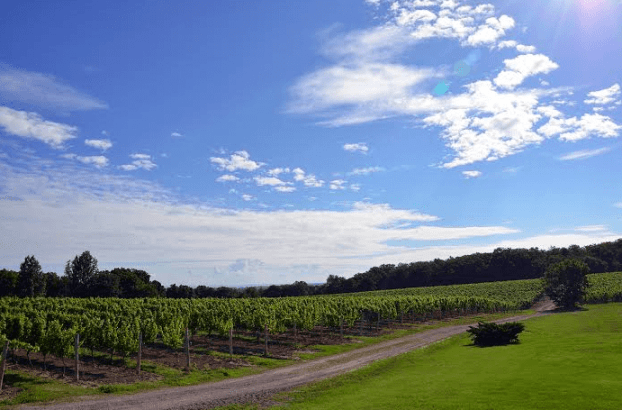 vineland ontario