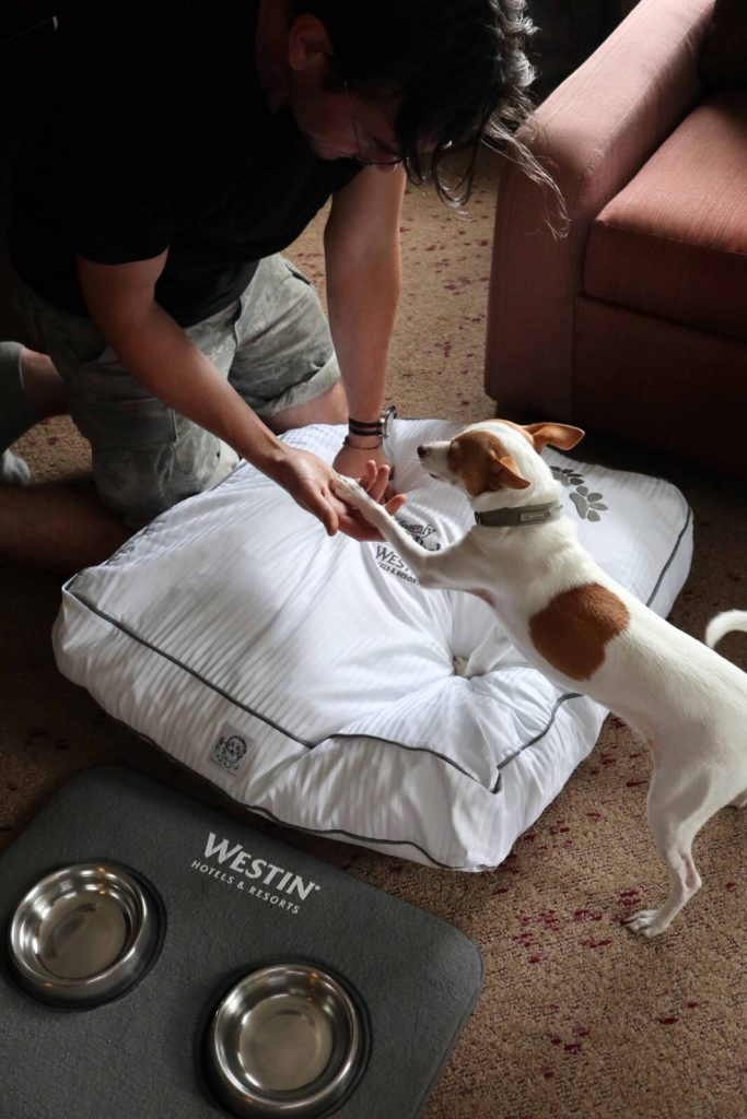 dog friendly hotels toronto - west harbour castle