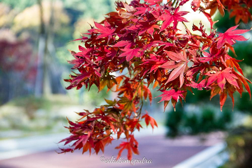Tentang Autumn