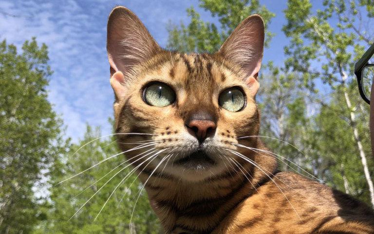 news edmonton international cat