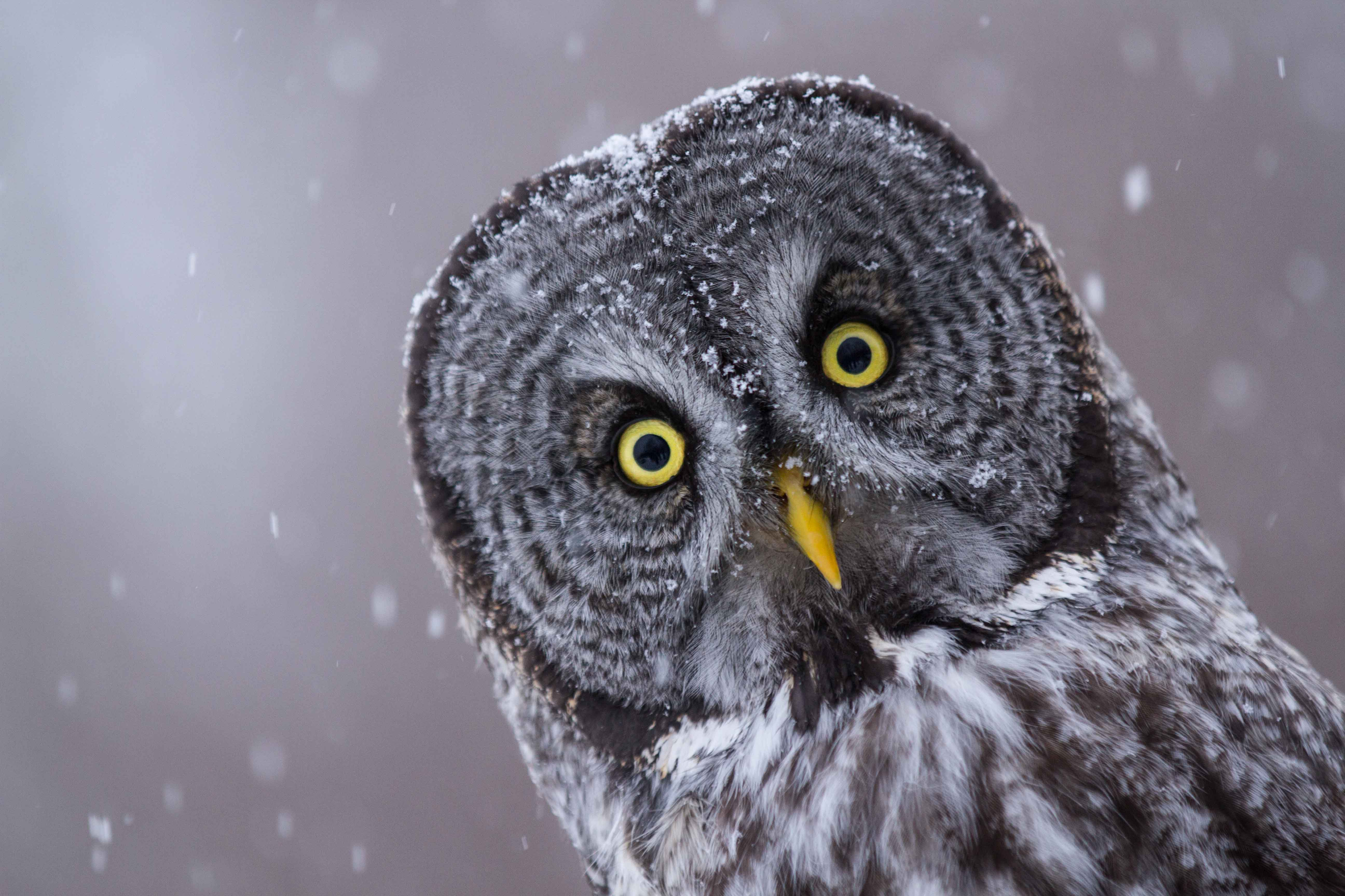 Ranking The 8 Most Adorable Species Of Owl