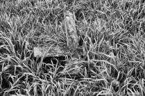 Yew Tree Cemetery (5)