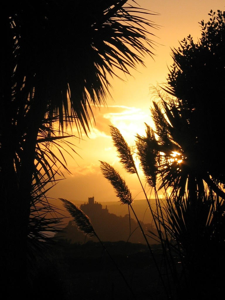 Palms and pampass silouetted in teh sunset with st Michael's Mount