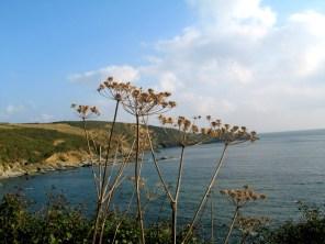 Cudden Point