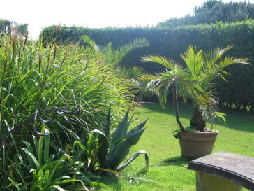 Palms and agaves